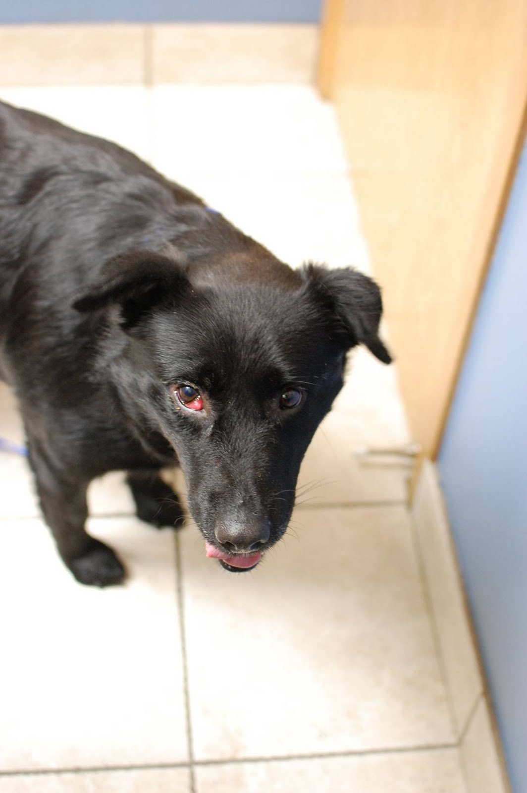 Dog Eye White Nicked Or Injury