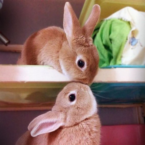 funny cute animals kissing wallpapers and images 2012 funny animals