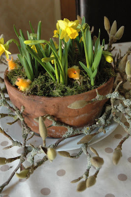 yellow tete-a-tete mini daffodils flowering at easter in a shallow terracotta plantpot topped with moss and some chicks from the pound shop!  Mossy magnolia branches in bud surround the pot.