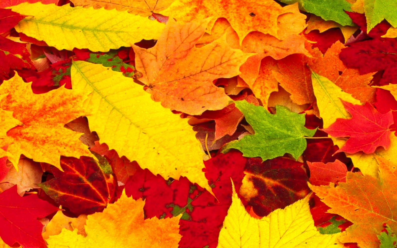 Fall Leaves Photography Wallpaper Desktop Wallpapers,Ani...