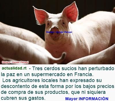 MUNDO: Agricultores franceses sueltan cerdos en supermercado como medida de protesta (video)