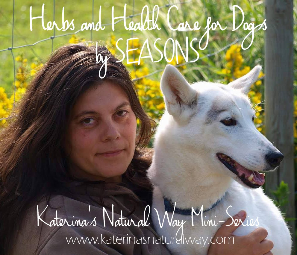 HERBS AND HEALTH CARE FOR DOGS BY SEASONS
