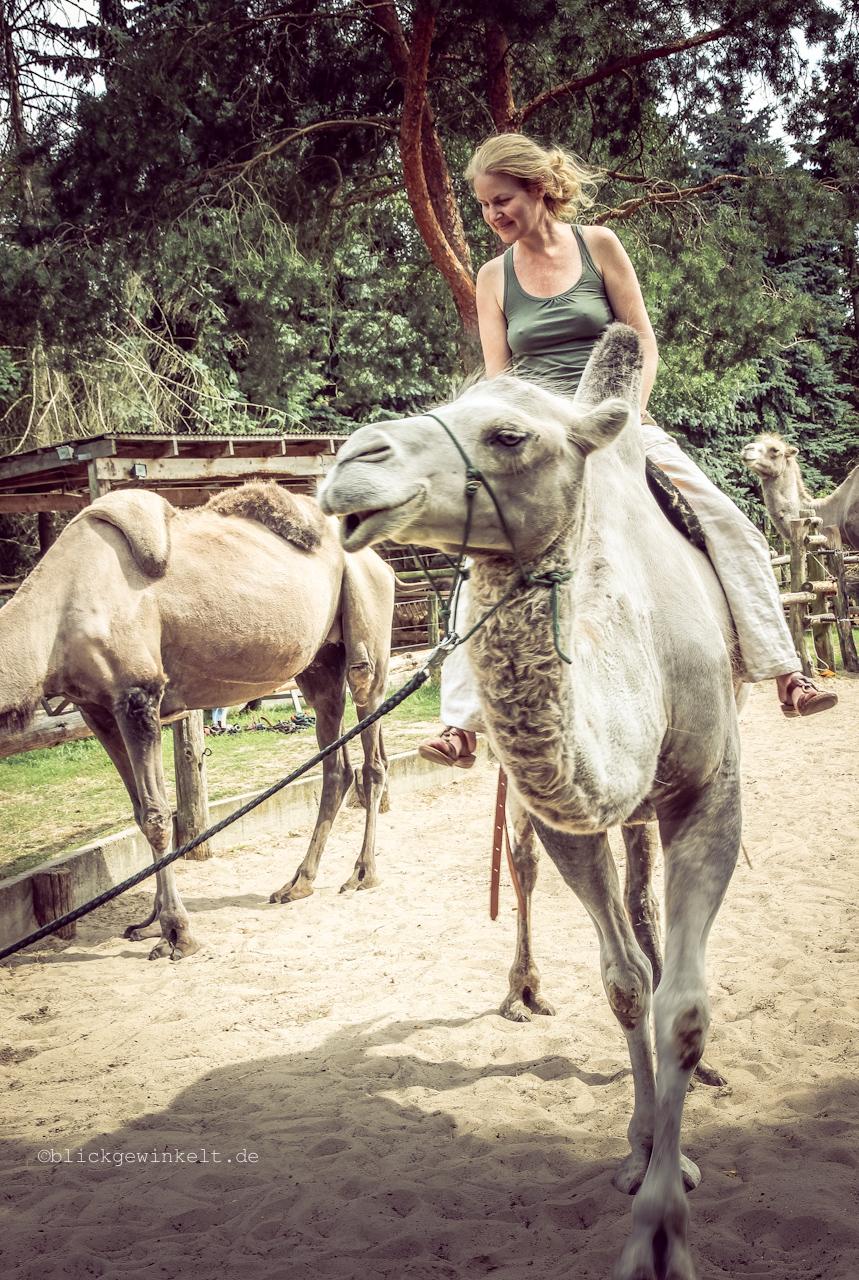 Inka reitet ein Trampeltier