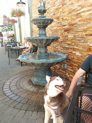 Outdoor cafe's can be great dog friendly places to visit