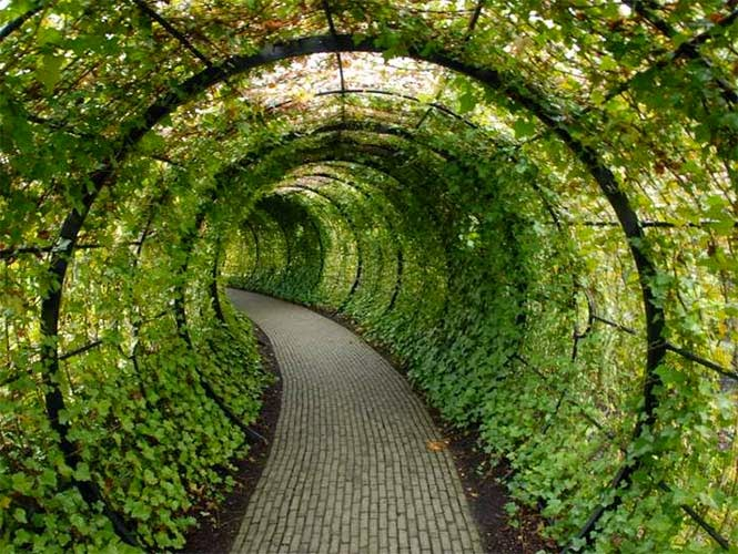 Id celos as para exterior for Celosias para jardin