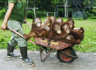Funny Monkey Pictures free