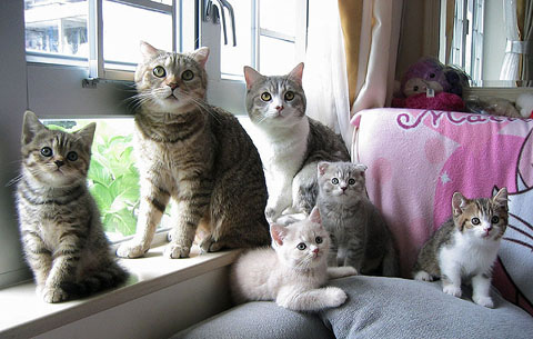 Funny Cat Family 2013 06