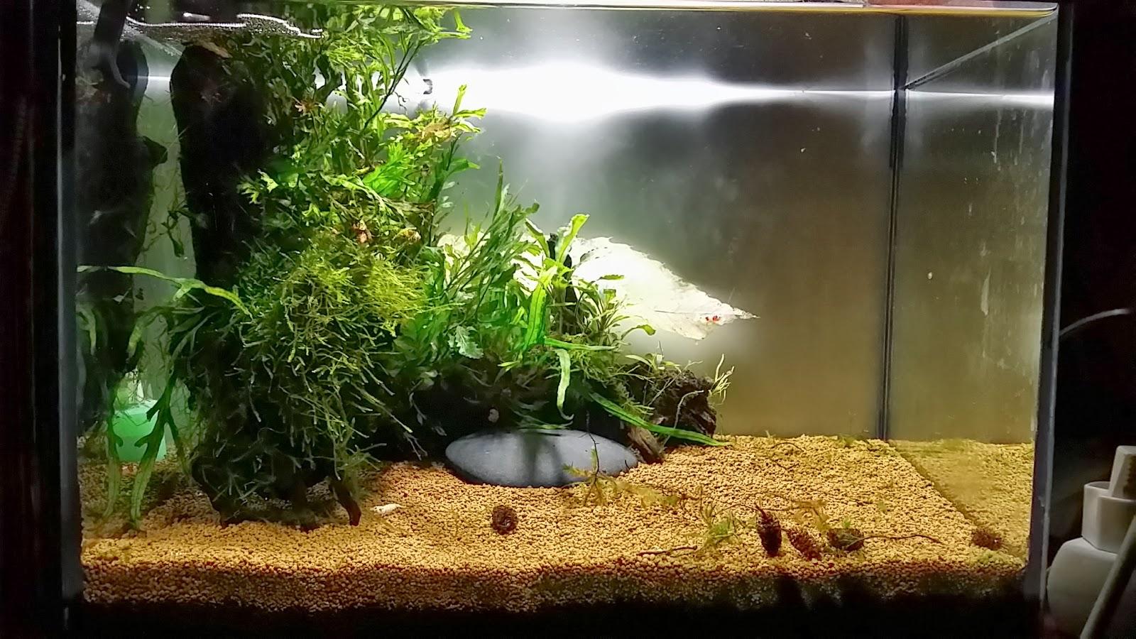 Gambas c a nuevo acuario para caridinas - Decoracion para acuarios ...