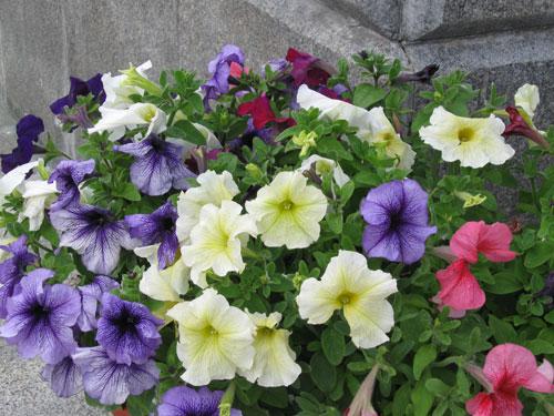 Pastellisävyinen kukka-asetelma