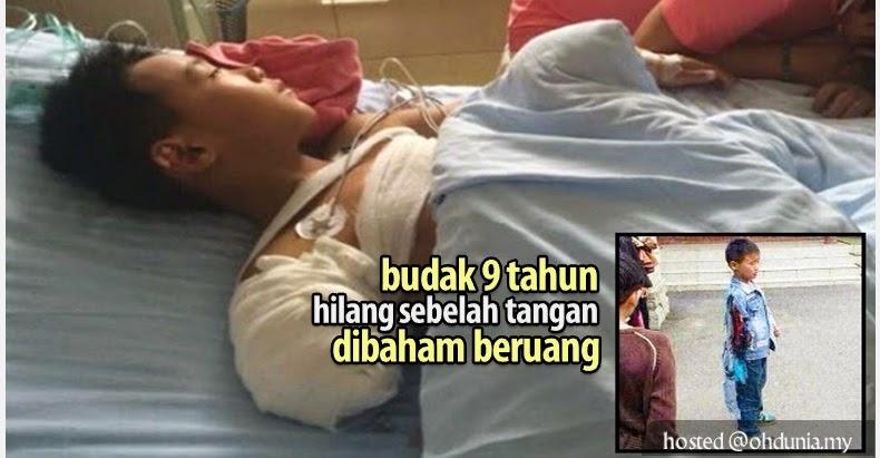 Budak 9 Tahun Hilang Sebelah Tangan Dibaham Beruang (4 Gambar)