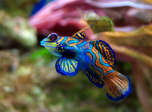 Fish n tips for Exotic tropical fish