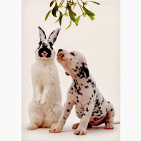 rabbit and dog under mistletoe