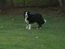 Toby (1999-2012)