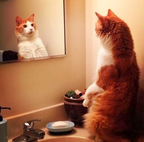 Funny cats - part 89 (40 pics + 10 gifs), cat looking into a mirror