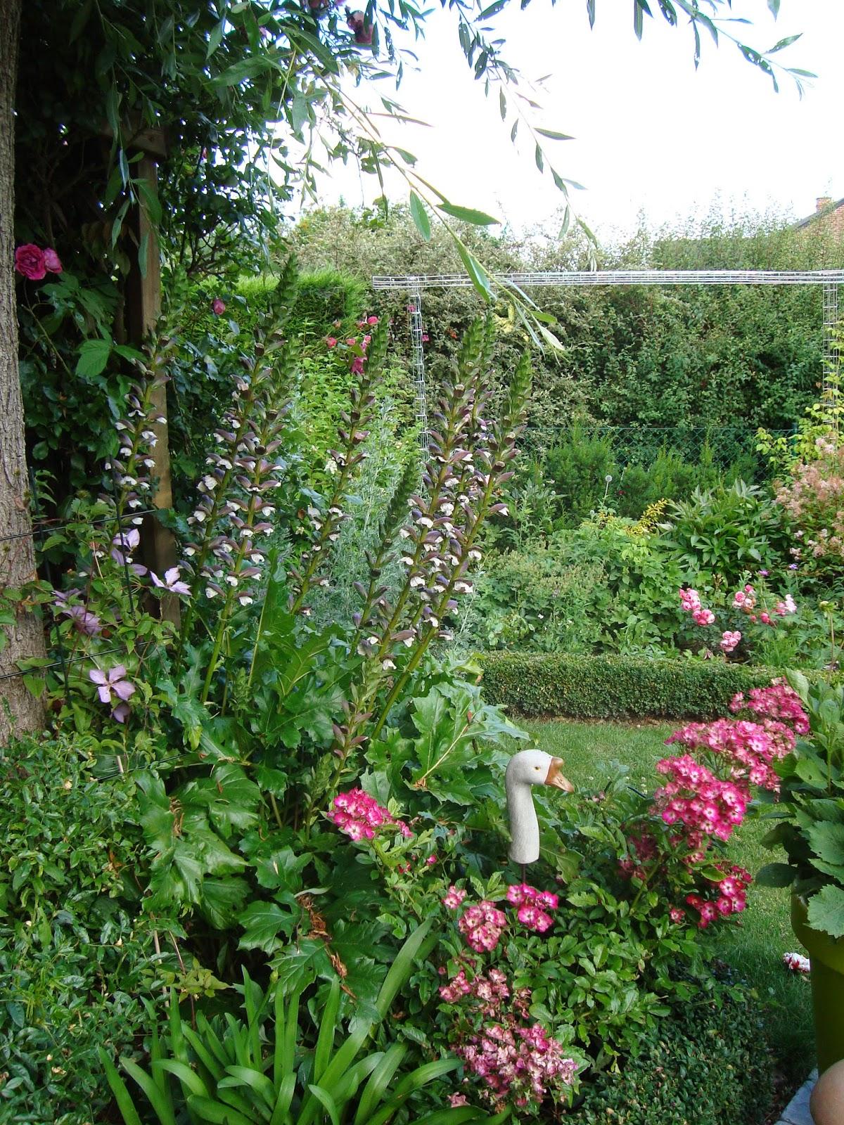 Passionn ment jardin acanthe tu l 39 as chapp belle - Plante a fleur jaune 6 lettres ...