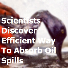 A new material could expedite the clean up of oil spills, while saving the crude material.