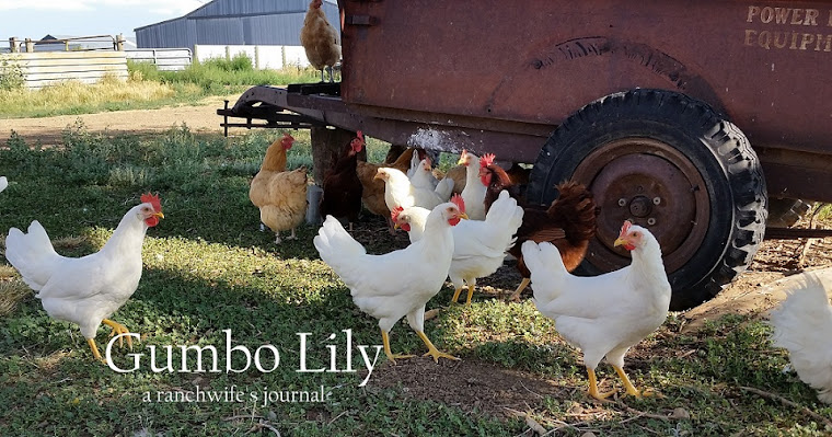 Gumbo Lily