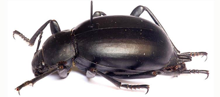 Boletín Sociedad Andaluza de Entomología Vol. 15