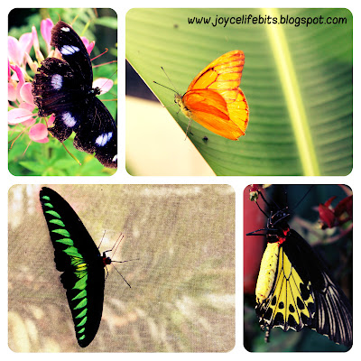 beautiful vivid color butterfly
