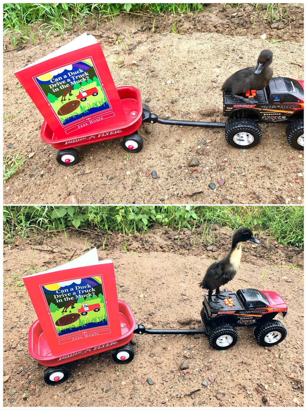 Can a Duck Drive a Truck in the Muck?