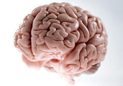 http://1.bp.blogspot.com/-dXG_SpXj4ys/URcZgCz_prI/AAAAAAAAAI8/WGcYair7RtE/s1600/cerebro.jpg