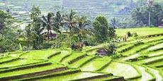 Subak (Bali)
