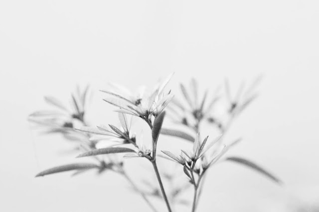 Poinsettia on the terrace. Micro Nikkor 60mm & Nikon D300