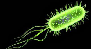 flagel dan silia alat gerak bakteri