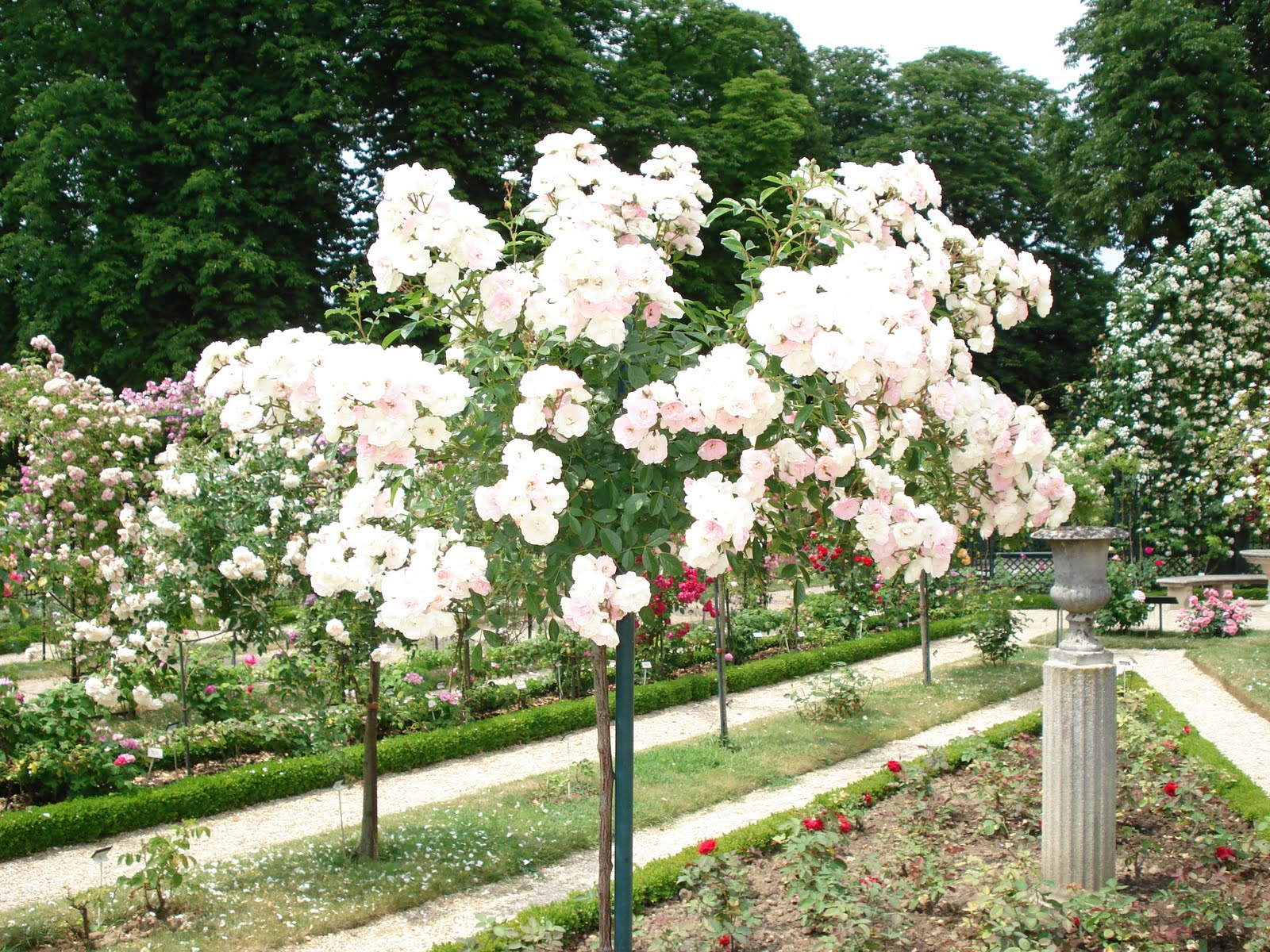 french beauty mark the rose garden at lhay les roses paris - Most Beautiful Rose Gardens In The World