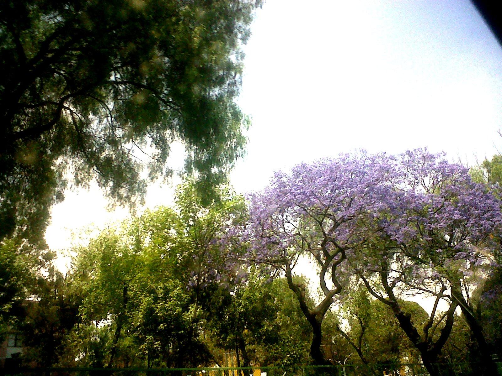 Árboles, Plantas y Flores de la Tierra Santa, DVD de Fotos