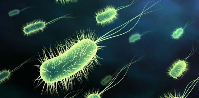 Bacteria con flagelo y biologia