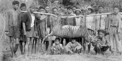 El rinoceronte negro, sólo uno más de una extensa lista de animales extintos 0001099538