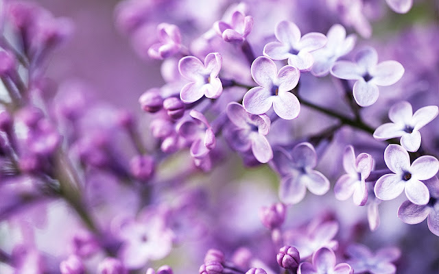 Beautiful Spring Purple Flowers