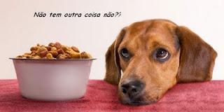 cachorro querendo comida