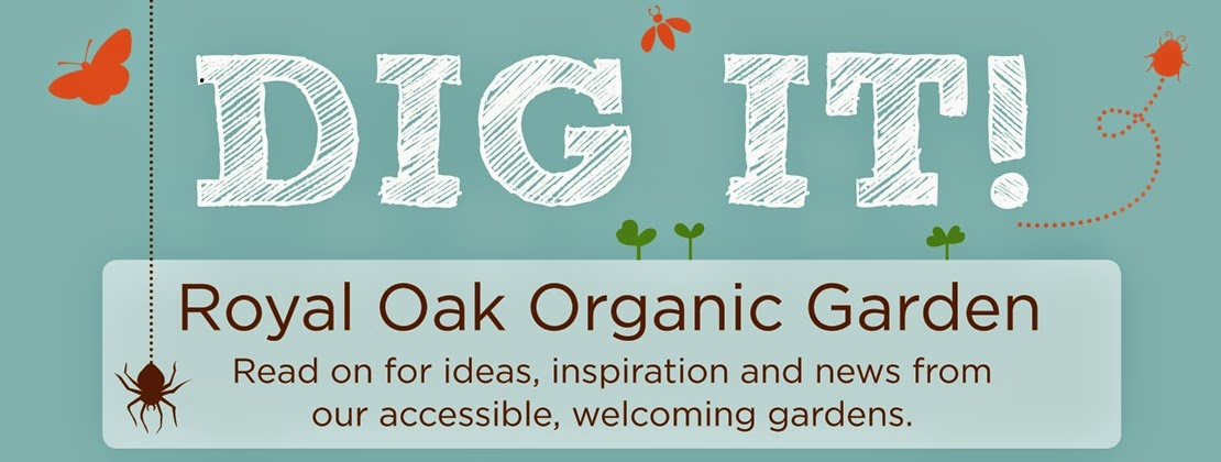Dig It! Royal Oak Organic Garden