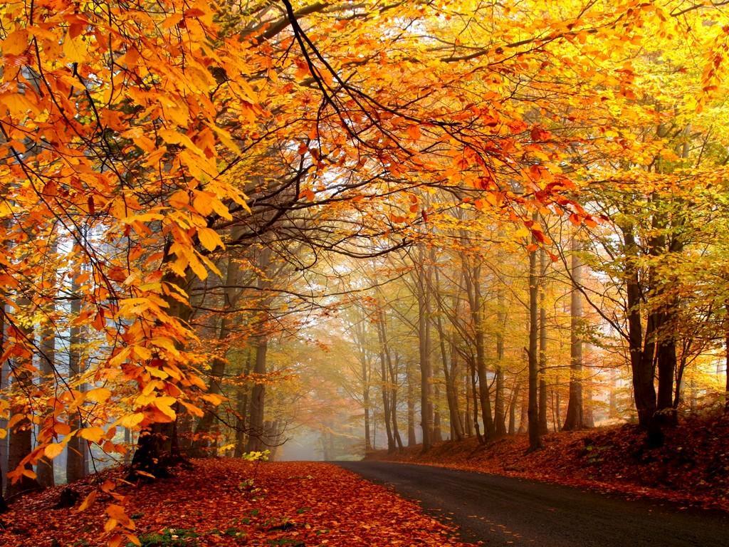 Storia di scandale autunno for Foto per desktop gratis autunno