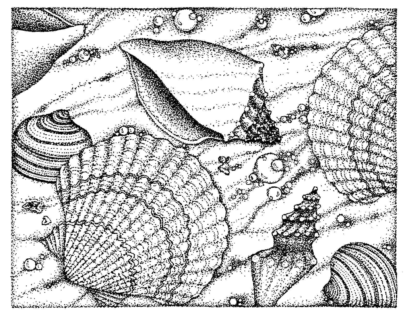 coloring pages sea shells - inkspired musings comments seashells and coloring books