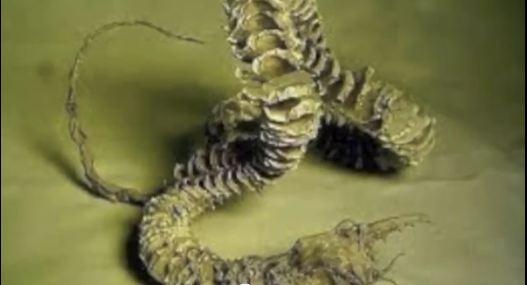 Mongolian Death Worm Tales 9