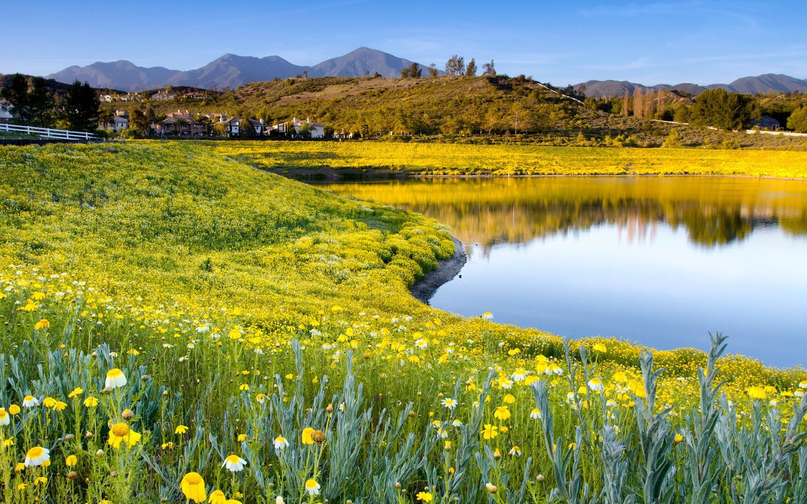 Banco de Imágenes Gratis: Imágenes de flores para el día