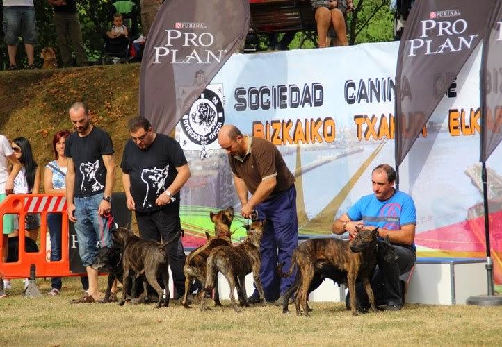 Muskiz acoge la 50ª Exposición Estatal y la 49ª Internacional Canina