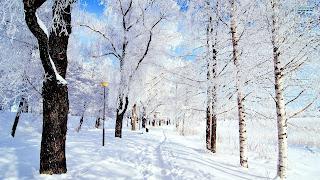 http://1.bp.blogspot.com/-d_5pBHN0dGo/UnoTG-YEdtI/AAAAAAAAHBM/uROskobRHcI/s400/winter-in-the-park-16501-1920x1080.jpg