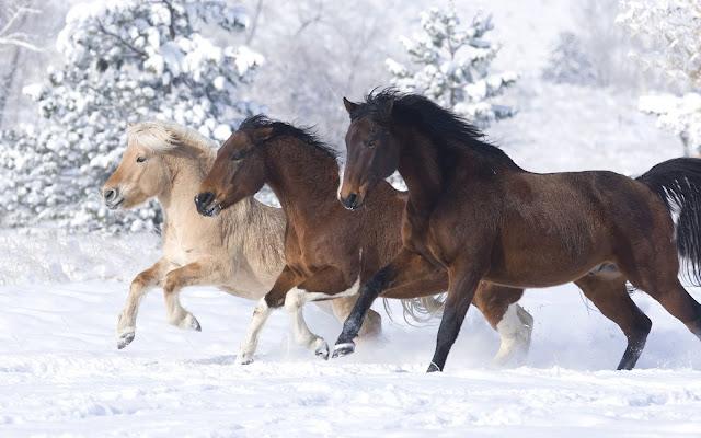 Caballos Corriendo en la Nieve Imágenes de Animales
