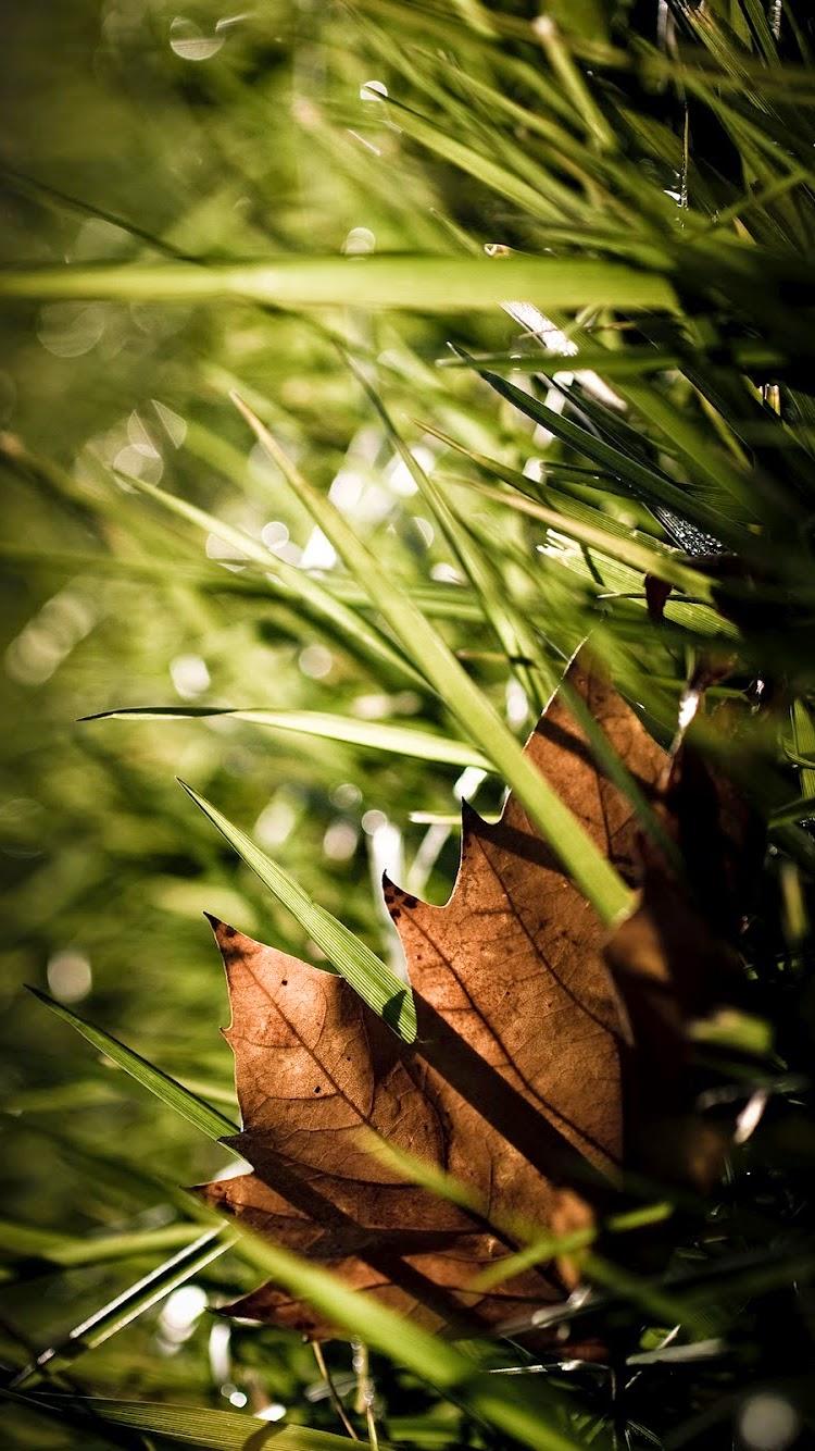 leaf nature iPhone 6