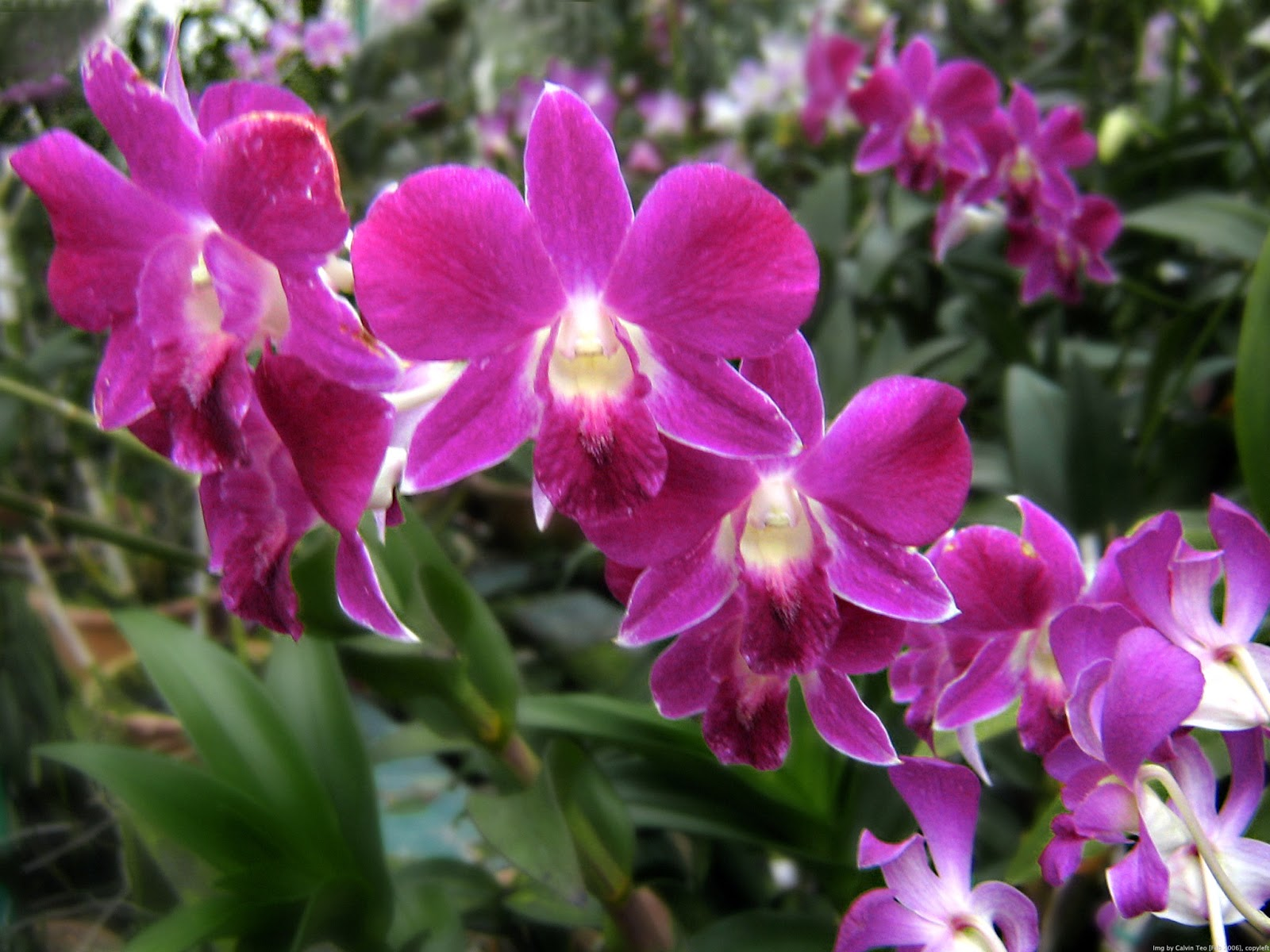 Orchid Flowers The Beauty plus the increasingly rare Life Is Beautiful
