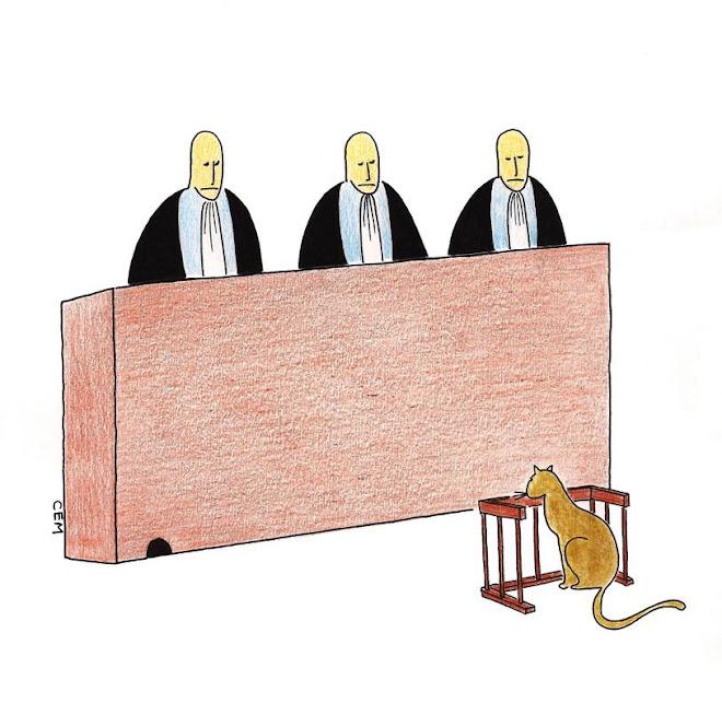 Court - Cem Koç