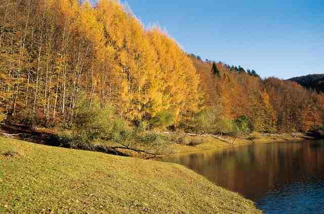 Clima i vegetaci d 39 europa i del m n vegetaci d 39 europa for Temperatura frigo da 1 a 7