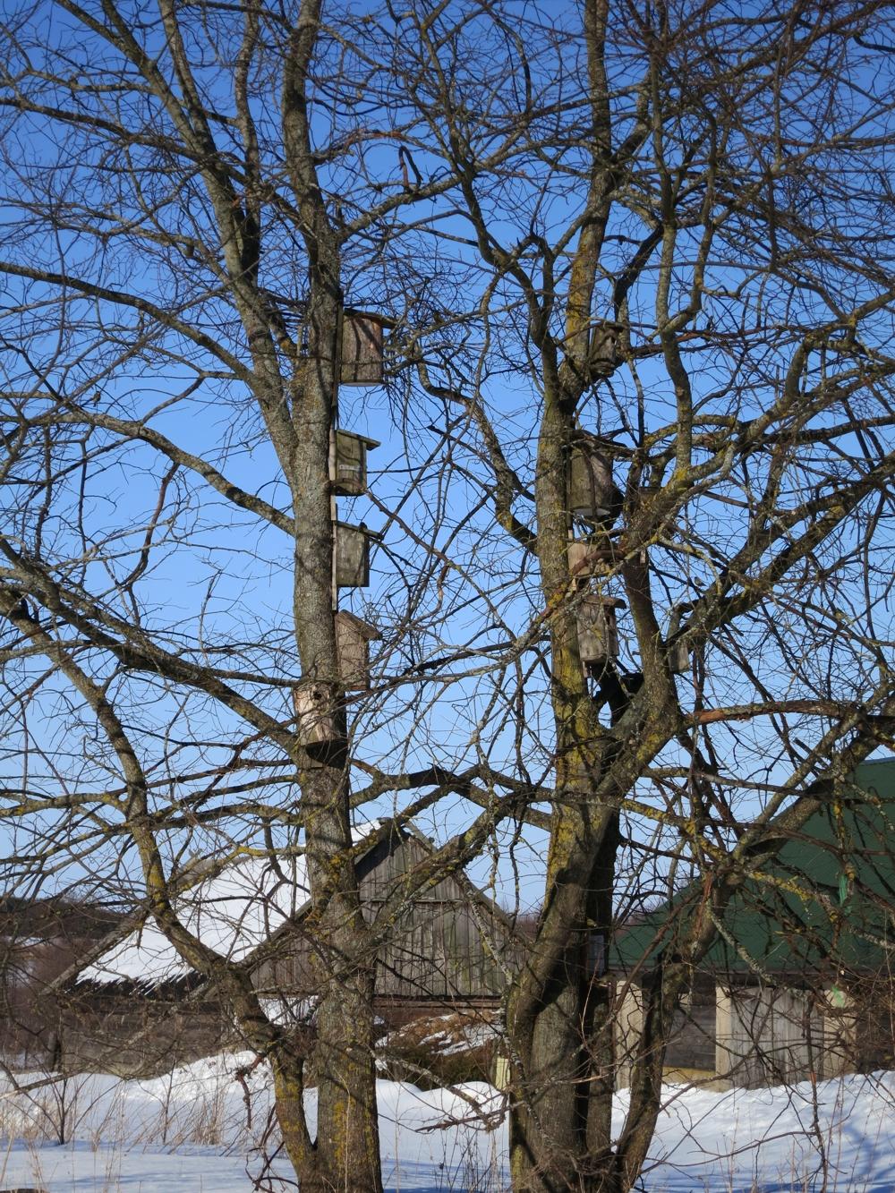 Widok na drzewa z karmnikami dla ptaków, zima w Harkawiczach, w tle drewniane domy