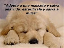Adopta una mascota