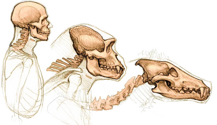 Reference Fiesta Comparative Anatomy
