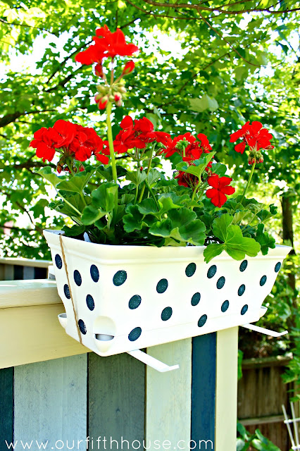 polka dot window boxes